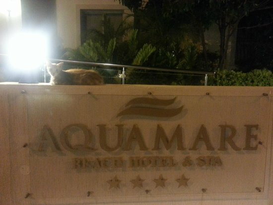 Aquamare Beach Hotel & Spa : Entrance with the cat