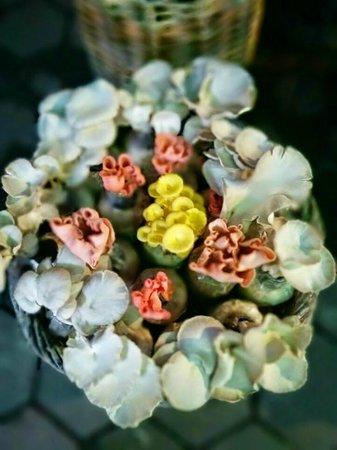 Jejamuran: Jamur Tiram