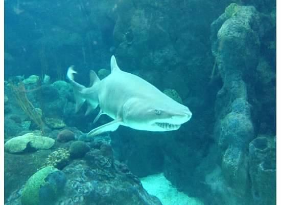 The Florida Aquarium: Shark