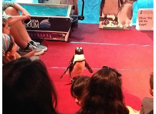 The Florida Aquarium: Penguin Show