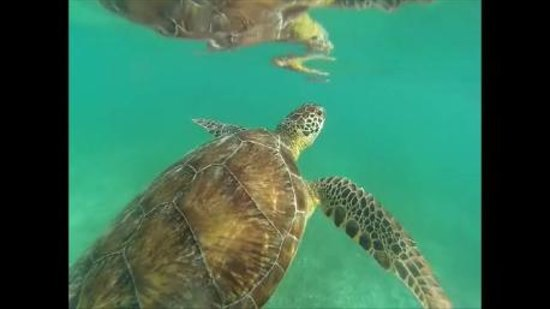 Akumal Dive Shop : Turtles Up Close