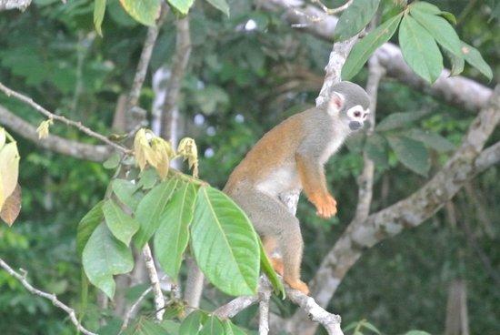 Napo Wildlife Center Ecolodge: One of many monkeys we saw when canoeing through the jungle