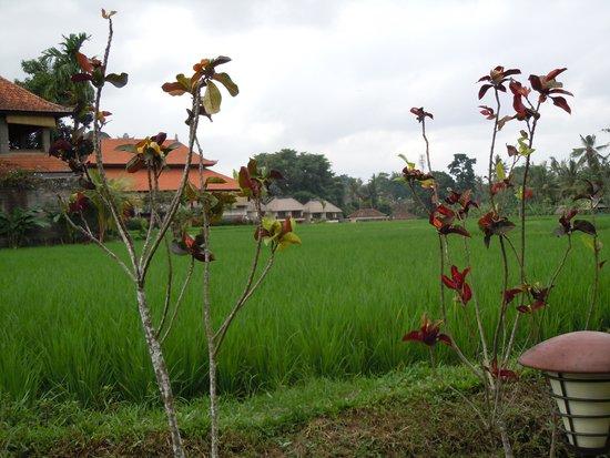 Alaya Resort Ubud: Rice Fields