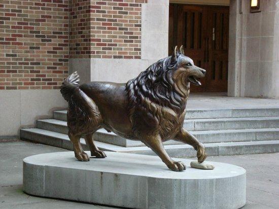 University of Washington: O mascote da Universidade