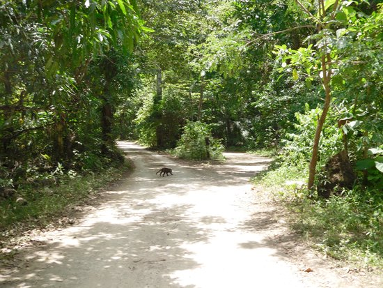 Curu National Wildlife Refuge : Road to the Visitor's Center.