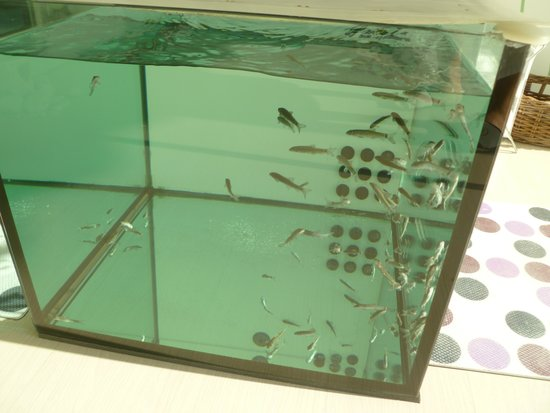 Hotel Mioni Royal San: Fish pedicure