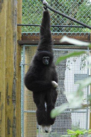 Monkey World: hanging around