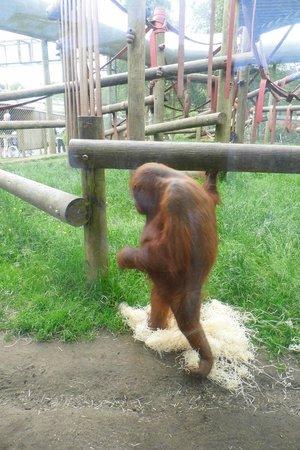 Monkey World: oshean