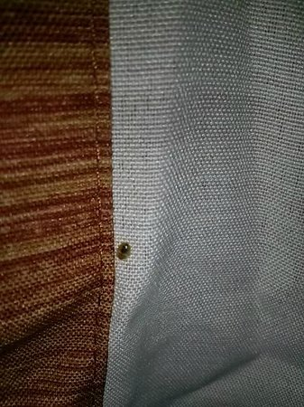 Hampton Inn Cleveland Airport-Tiedeman Rd: larvae/nymph stage bed bug (7/16/2014)