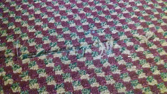 Microtel Inn & Suites by Wyndham Oklahoma City Airport: carpet.. wear your shoes!!
