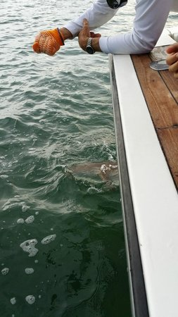 KAY K IV Sport Fishing Charters: Nurse shark