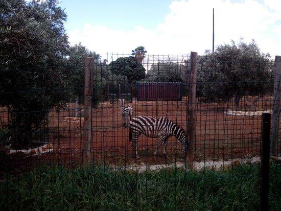 Bioparco di Sicilia: sezione fattoria - zebra