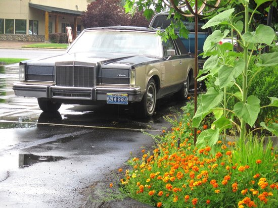 Sierra Motel : Flowers Everywhere