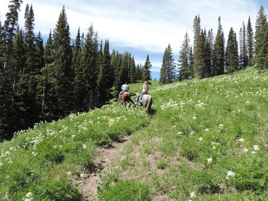 Wild Skies Cabin Rentals : Views from our horseback riding
