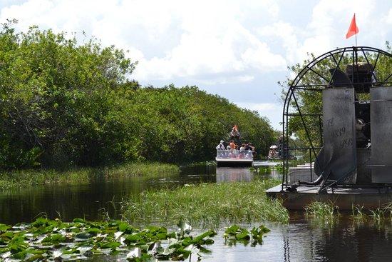 Gator Park: Everglades