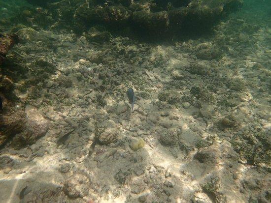 Tours en Islas del Rosario: Example of fish and coral