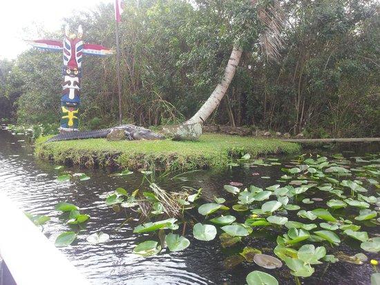Everglades Safari Park: El cocodrilo mas grande de allí.