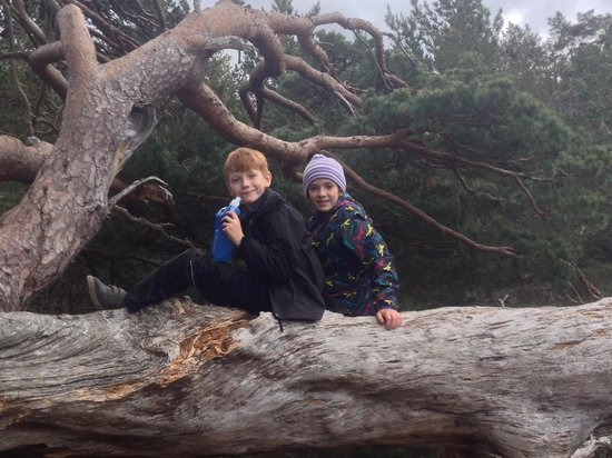 Fraoch Lodge: All kids should climb trees - plenty to choose from here in Scotland