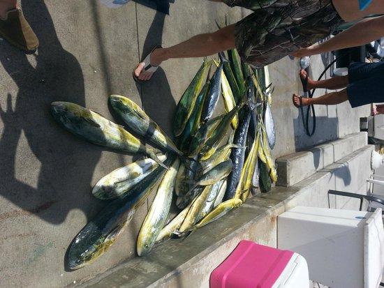Lady Pamela II Sportfishing : freezer is full