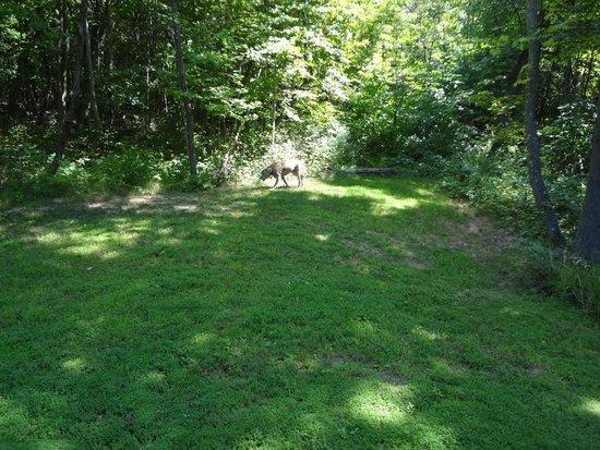 Springwood Cabins: Yard