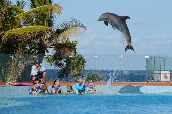 Dolphin Discovery Akumal