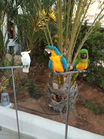 Intertur Hotel Miami Ibiza : Animation