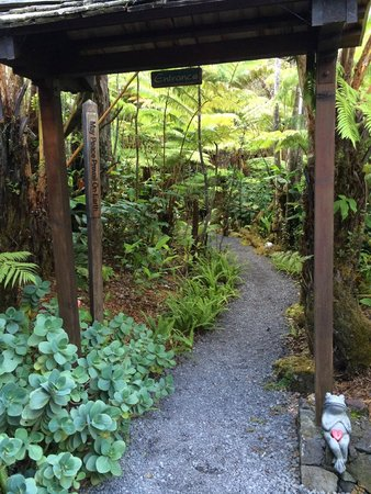 Volcano Rainforest Retreat : Pathway towards the cottages