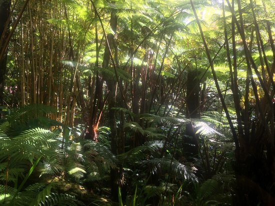 Volcano Rainforest Retreat : Yes...you are in a rainforest!