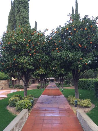 Radisson Suites Tucson: A really cool orange grove