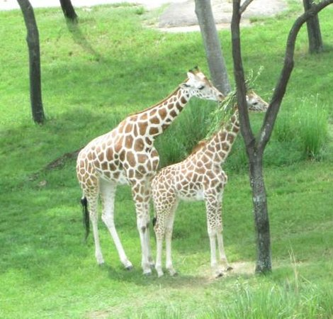 Disney's Animal Kingdom Lodge : View off of balcony
