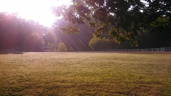 Meadow View Farm Bed and Breakfast: Good Morning Sunshine