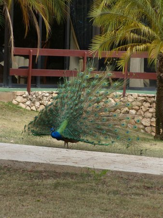 Breezes Varadero: our lovely grounds guest