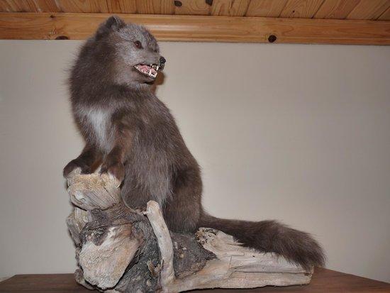 Hotel Ranga : Arctic fox