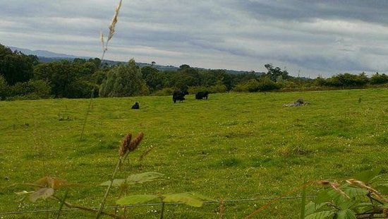 Muckross Traditional Farms: Just a munchin' away here