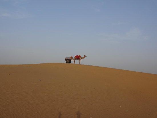came cart at sam sand dunes
