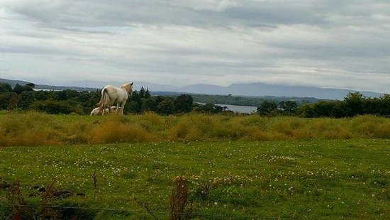 Muckross Traditional Farms: Look at the Lakes of Killarney.