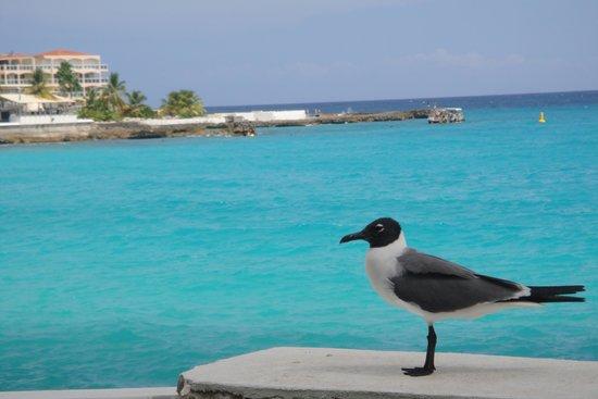 Sonesta Maho Beach Resort & Casino : Free as a bird in Sonesta Maho