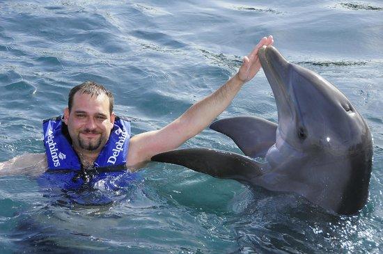 Delphinus Riviera Maya : nadando con delfines