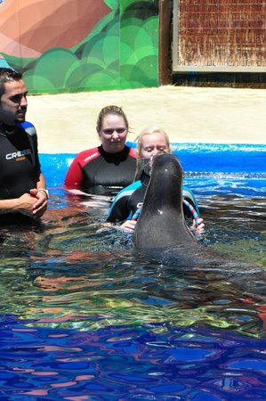 Mundomar : Sea Lion experience