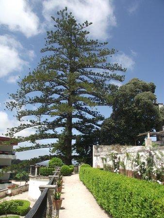 Palacio Nacional de Sintra: Jardim do Pinheiro que fica nos fundos do palácio.