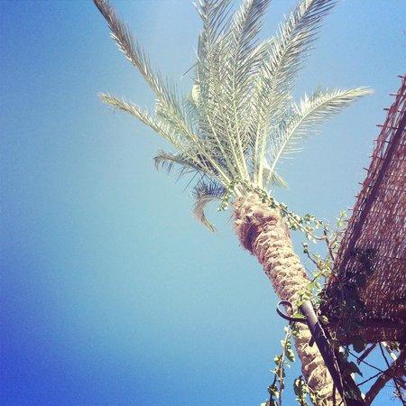 Steigenberger Coraya Beach : Pool area's kept super clean