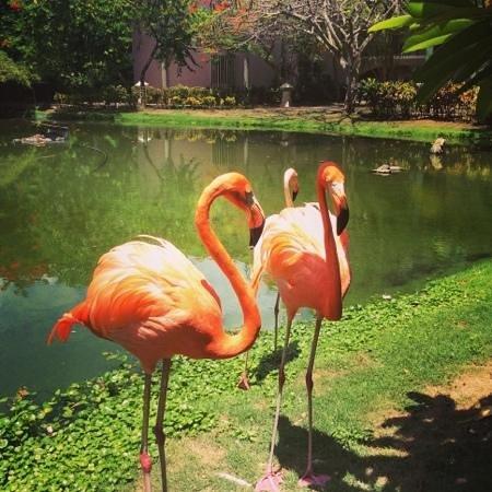 Natura Park Beach - EcoResort & Spa: Flamingos