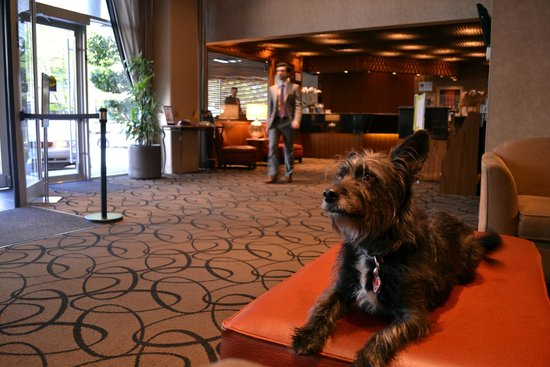 BEST WESTERN PLUS Chateau Granville Hotel & Suites: We are Pet Friendly