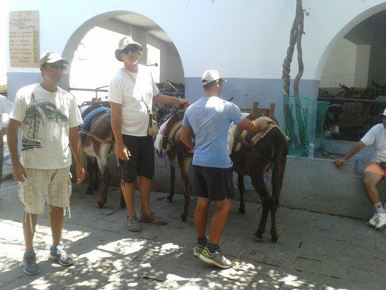 Lindos: donkey hire for 5euro