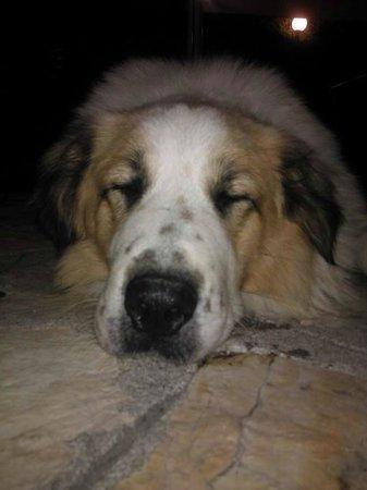 Aeolos Beach Resort : hotel dog