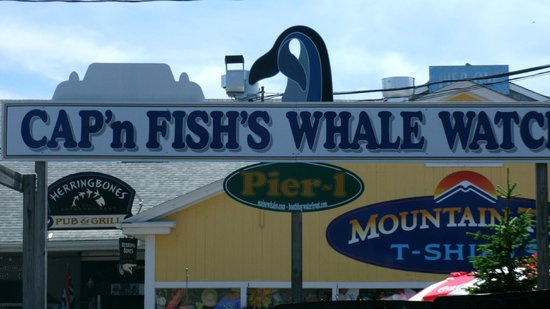 Cap'n Fish's Whale Watch: Pier Sign