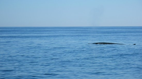 Cap'n Fish's Whale Watch: Distant whale