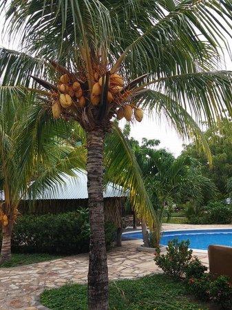 The Surf Sanctuary: Coconut