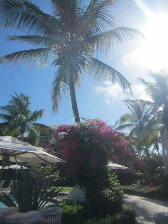 Ocean Club West : Landscape