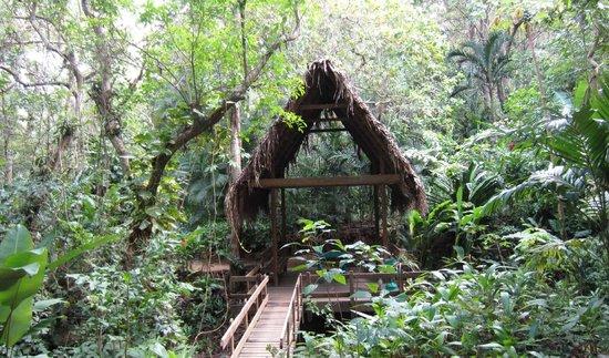 Carambola Botanical Gardens & Trails: garden